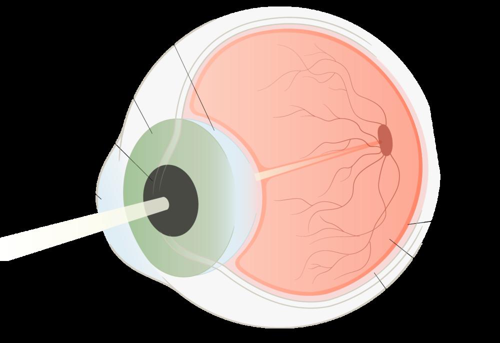 Blindness-Illustrations_07.png