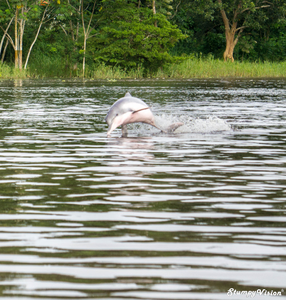 Pink Dolphins Puerto Narino Amazon Colombia Travel Blog.jpg