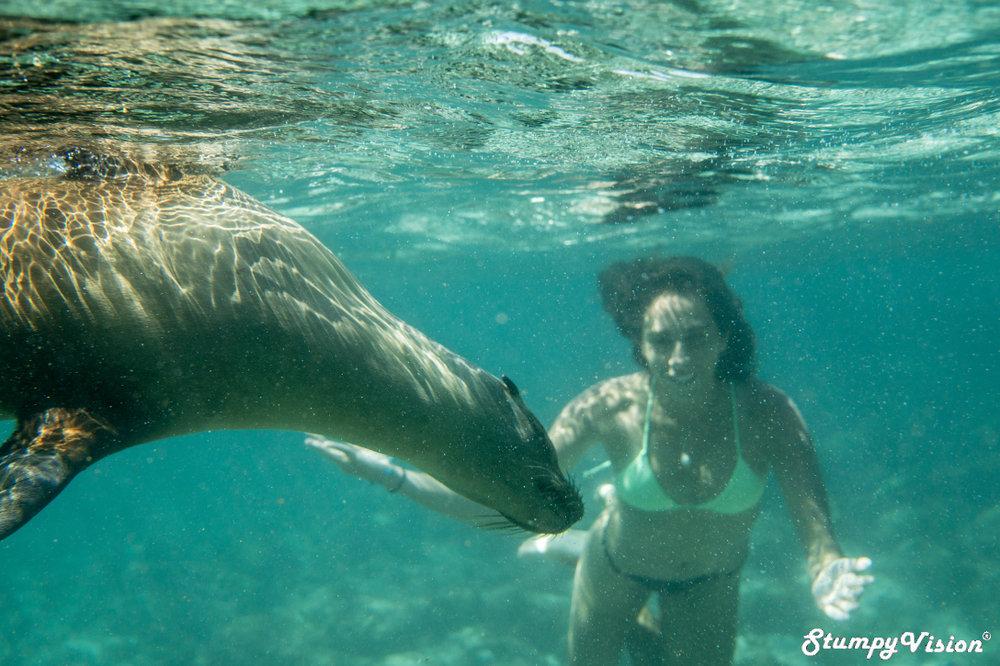 The Galápagos life.