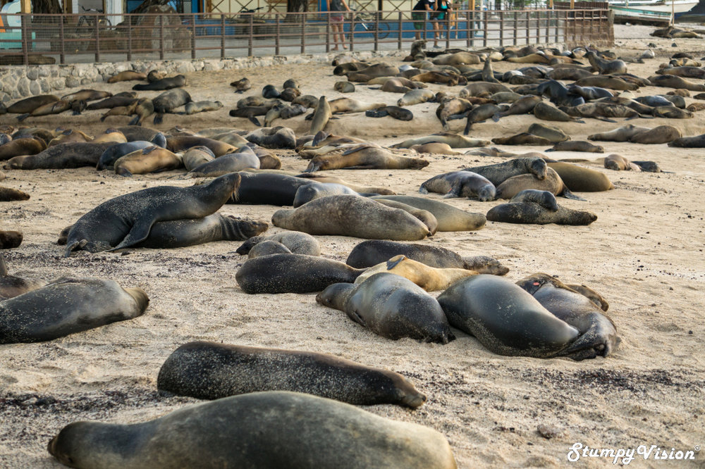 The sea lion colony in the heart of San Cristóbal . I would spend hours a day watching these crazy fat bast@%ds as a free source of entertainment.