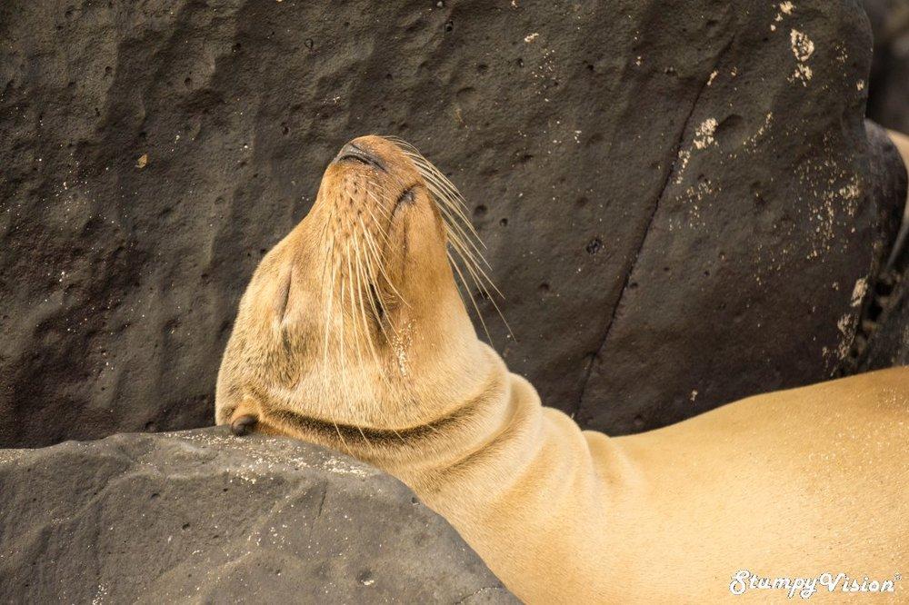 The sea lion life.