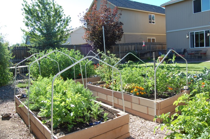 The expanded garden gives crazy yields in this suburban fun-size farm.