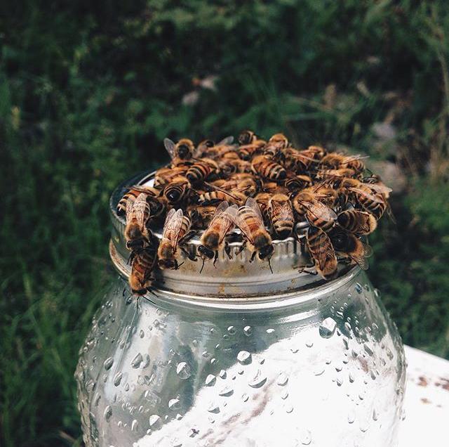 honey4.jpg
