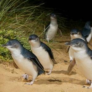Phillip Island -