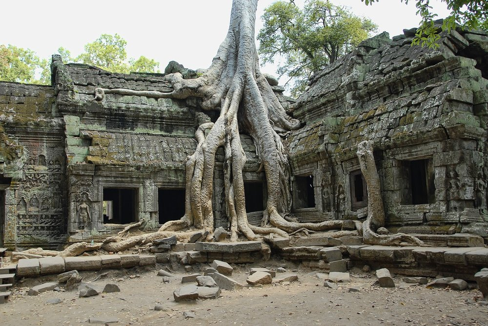 ancient stone temple with growing jungle tree roots ta prohm cambodia