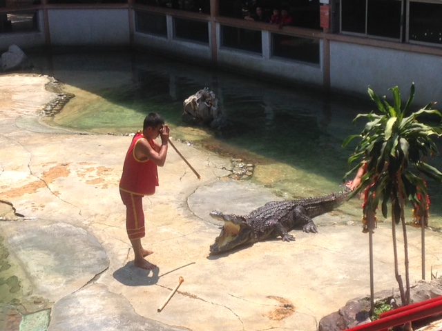 a man prays before the crocodile show
