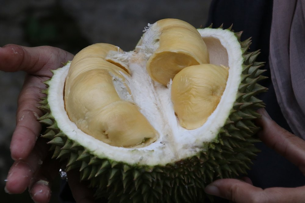 Thai fruit Durian
