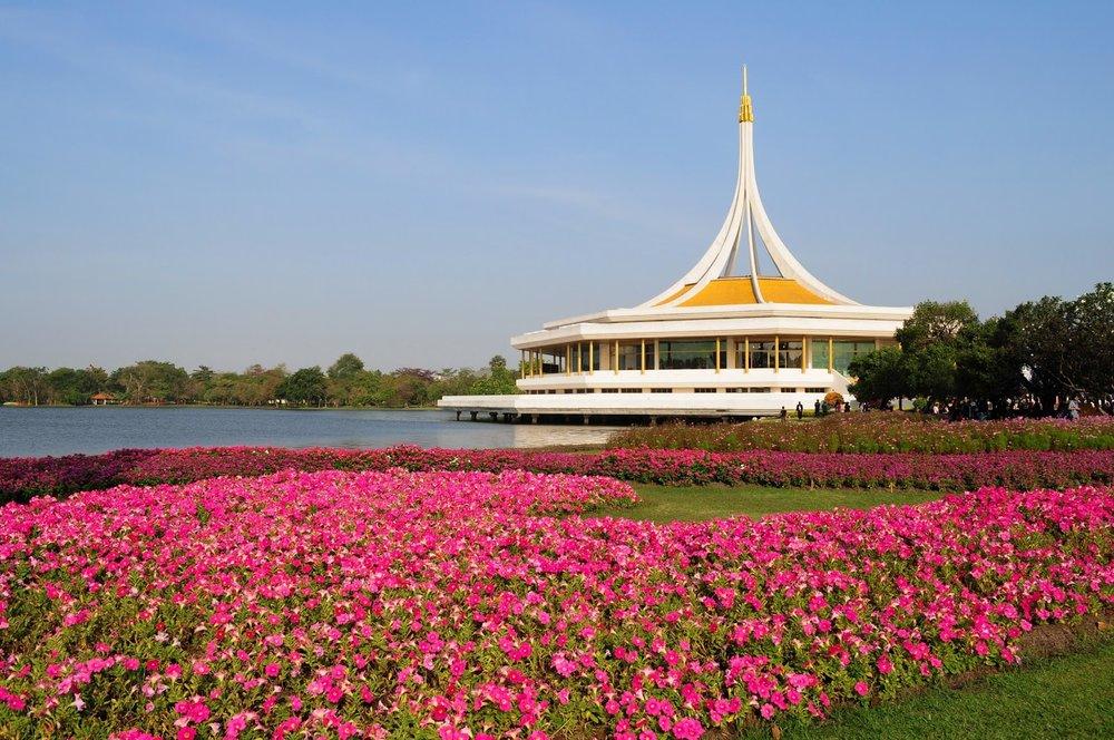 pink flowers and lake at Rama IX Garden park in Bangkok, Thailand