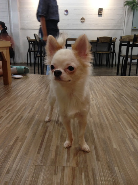 little dog at a cafe
