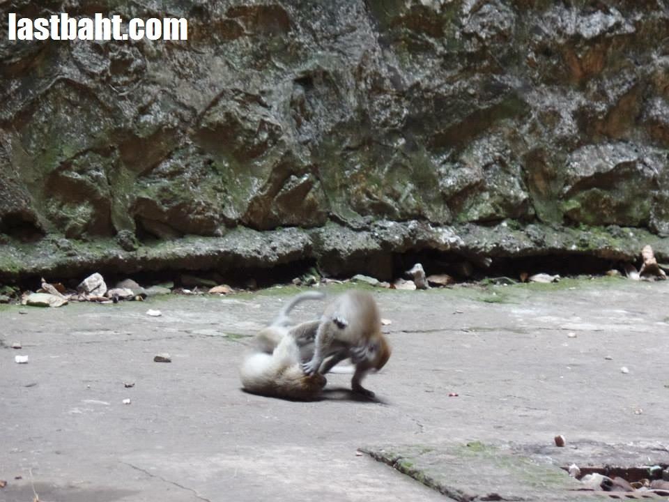 monkeys playing at Batu Caves