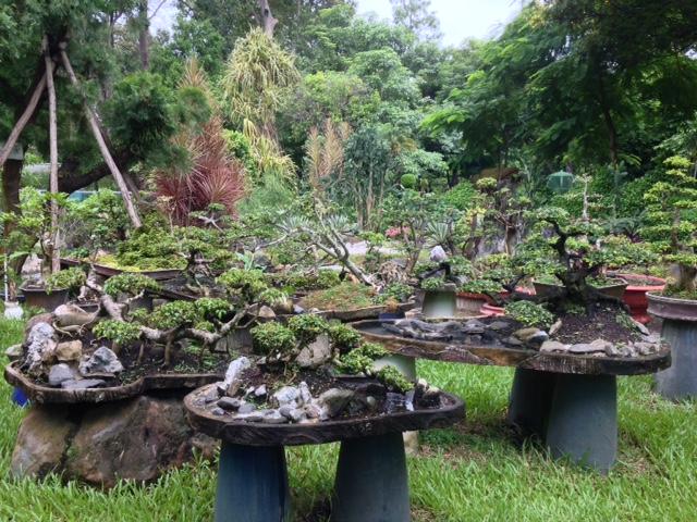 bonsai trees at the Saigon Botanical Gardens