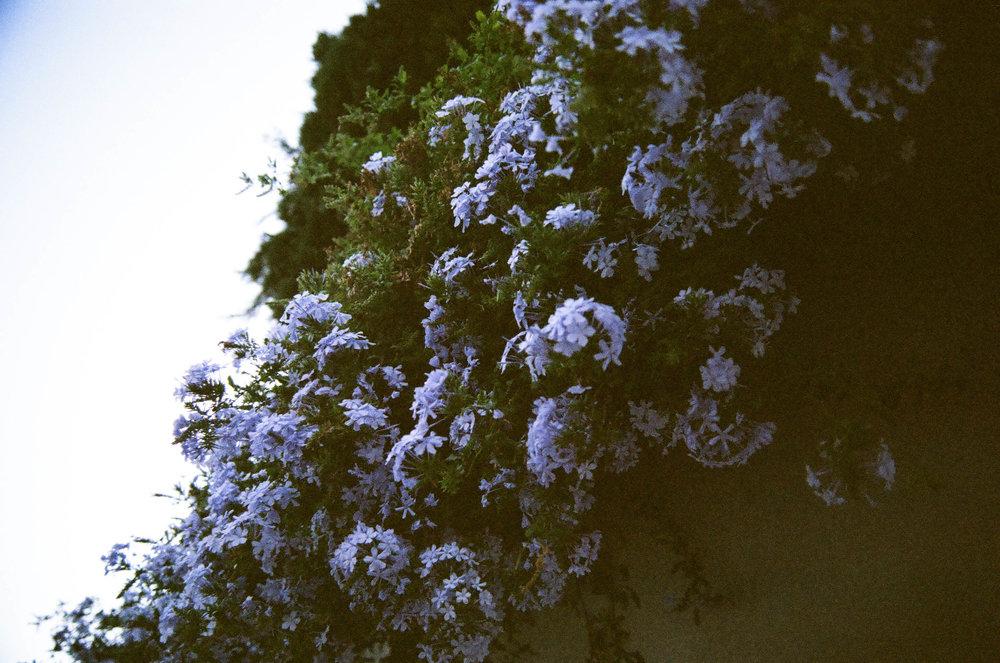 Granada_23.jpg