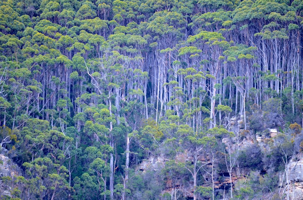 Tasmania 15.jpg