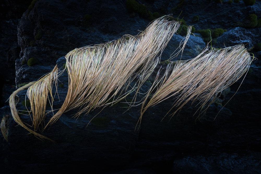Sandøya-DSC_0016-Bjørn Joachimsen.jpg