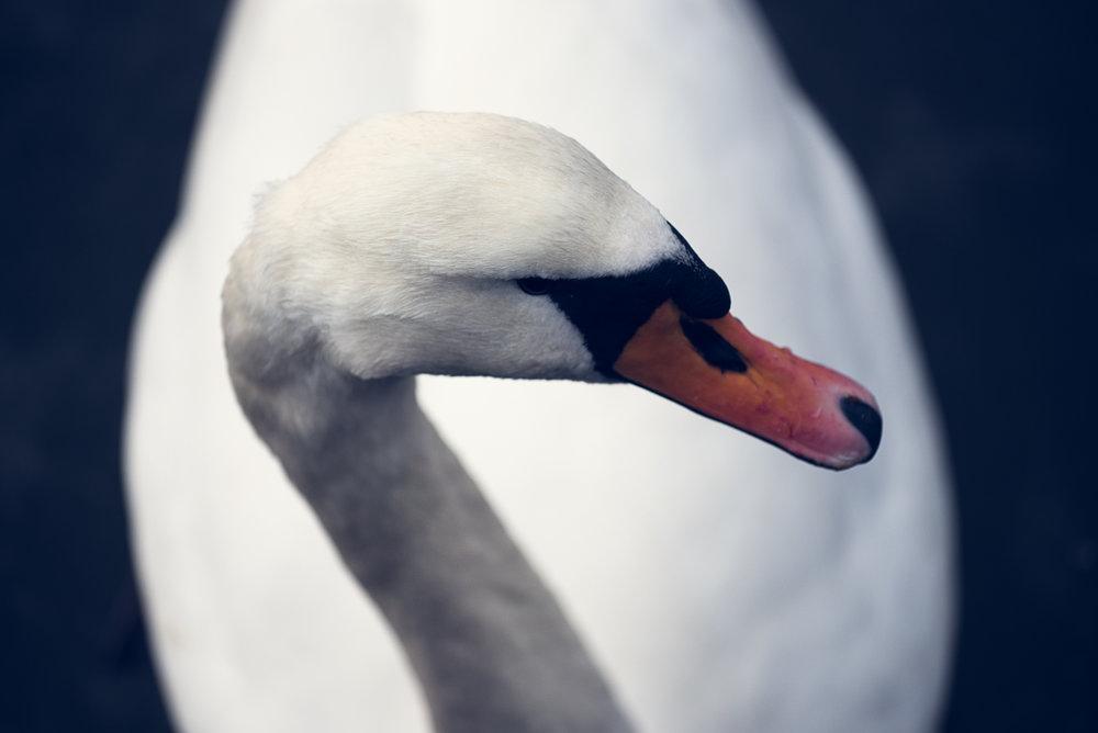 Lær hvordan du tar slike bilder med helt vanlig kamerautstyr.