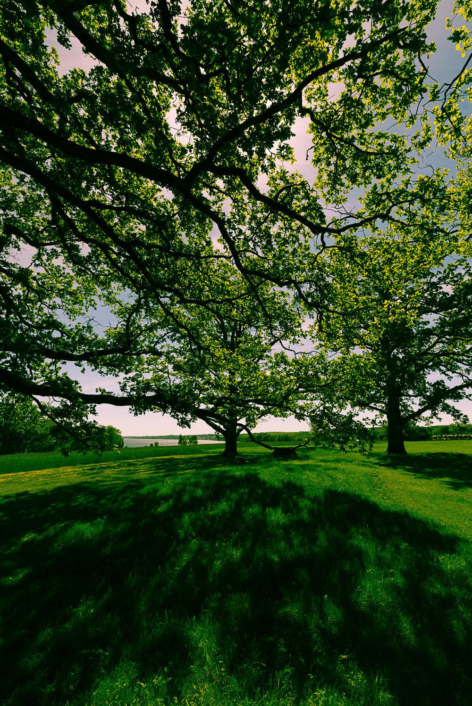 Borreparken, Horten-DSC_1944-©Bjørn Joachimsen.jpg