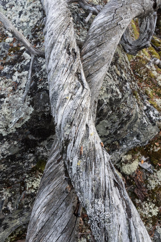 Jotunheimen-DSC_7183.jpg