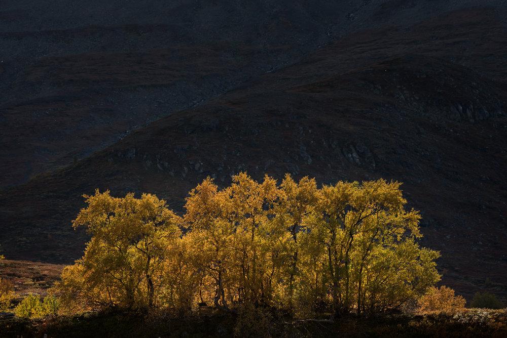 Jotunheimen-DSC_6891.jpg