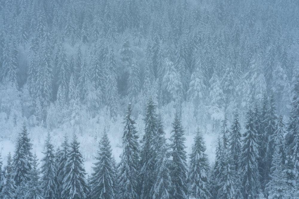 Winter forest. Hedmark, Norway.-DSC_7037-©Bjørn Joachimsen.jpg