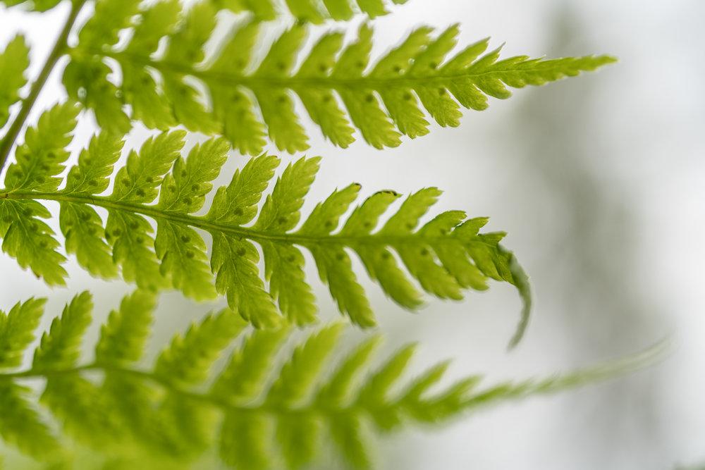 Naturfotografering. ©Bjørn Joachimsen.