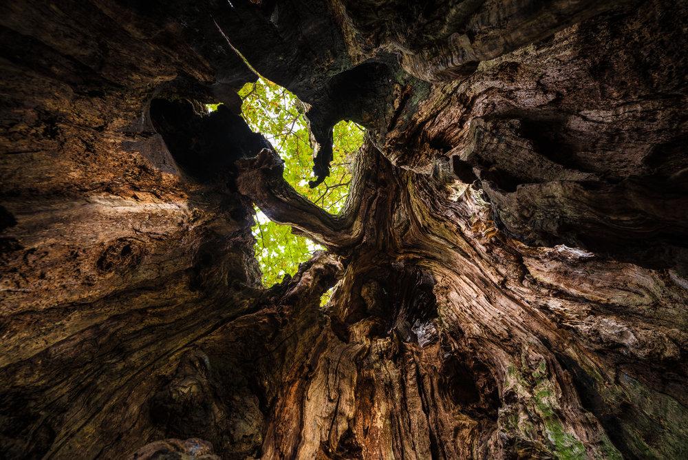 Lær hvordan du finner de spennende vinklene! Workshop i kreativ/eksperimentell naturfoto i Mo i Rana.