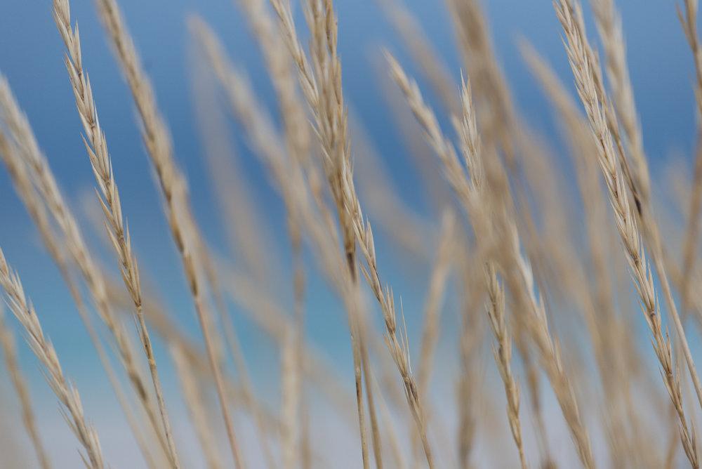 Sandøya-DSC_0775-©Bjørn Joachimsen.jpg