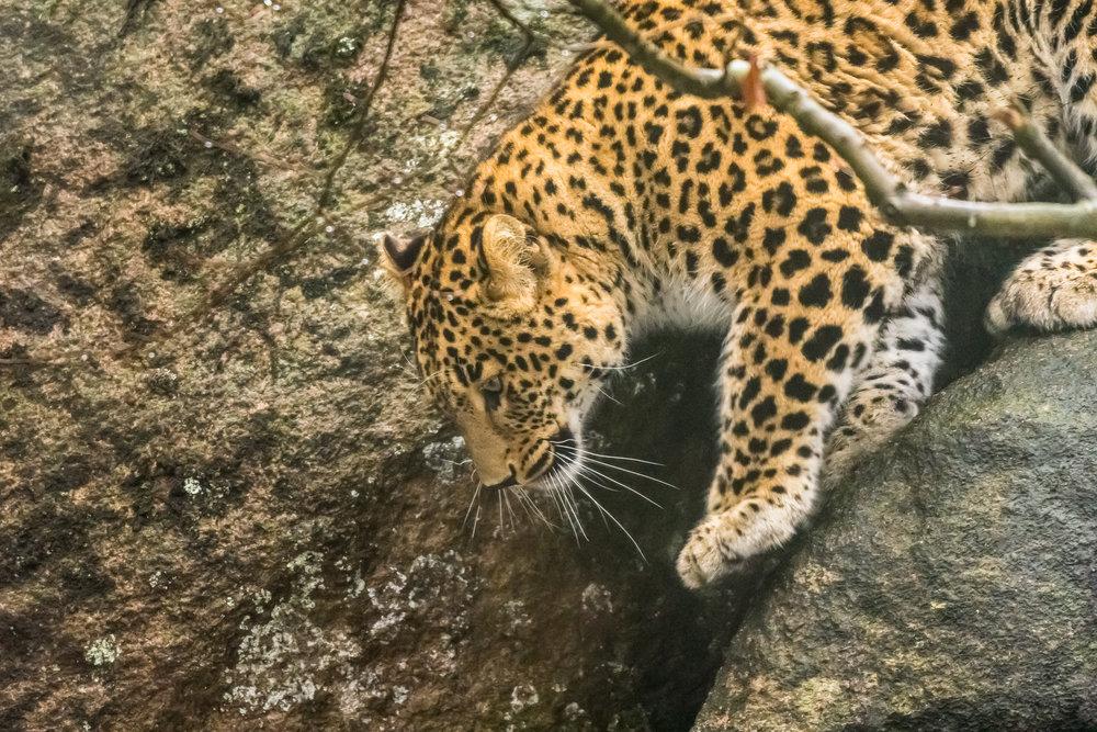 Lær hvordan du tar bilder av dyrene på Nordens Ark i Hunnebostrand. ©Bjørn Joachimsen.