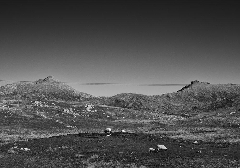Sheep on the moor. Mark Farrington, 2017