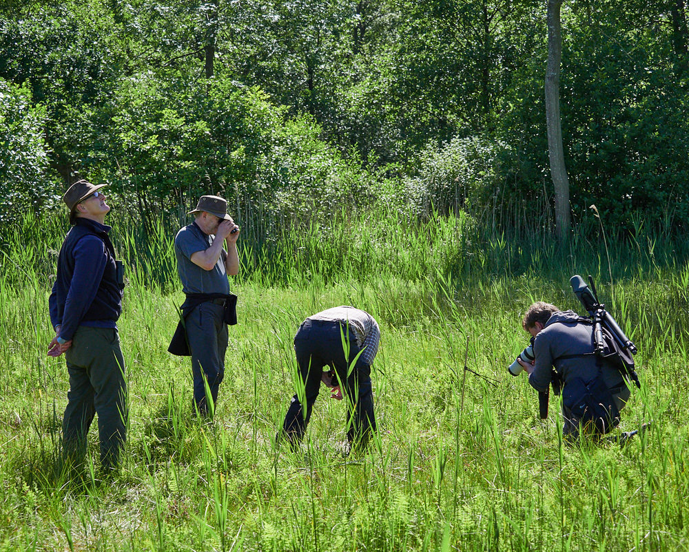Hunting the Fen orchid.jpg