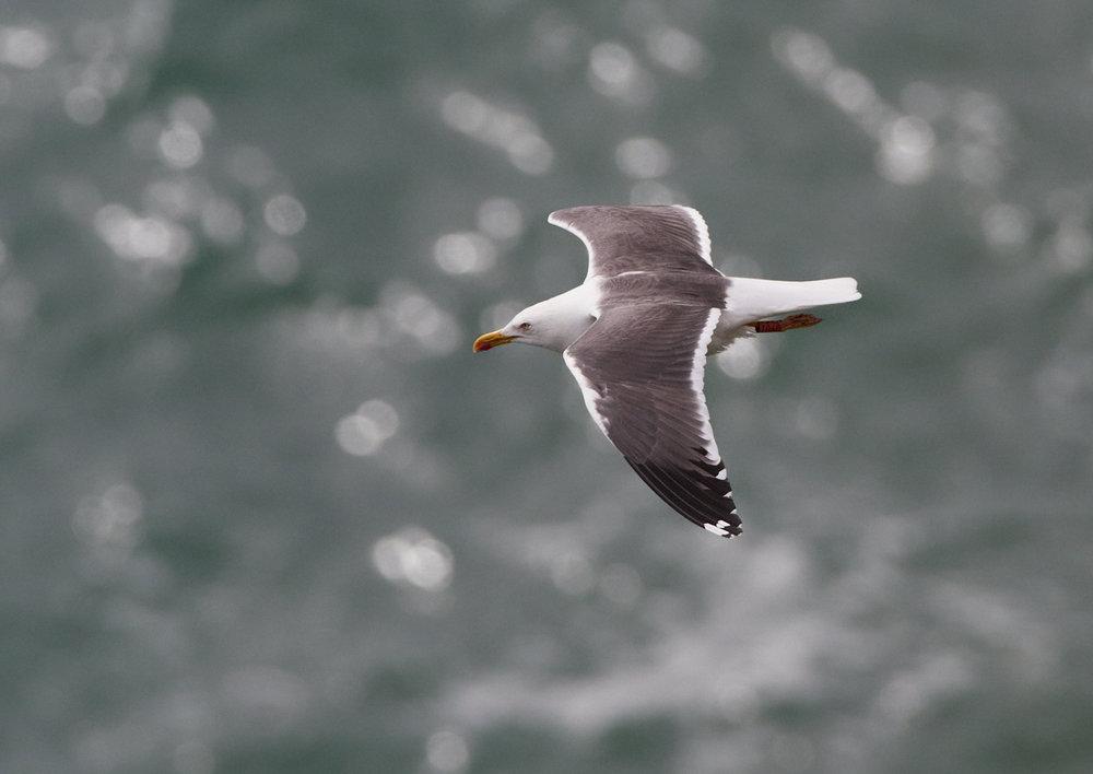Anglesea 1.jpg