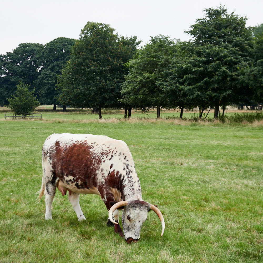Shugborough 13.jpg