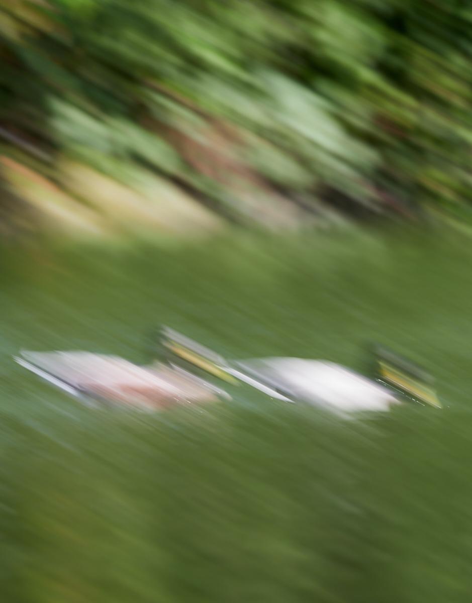 Duck focus1600x1200 sRGB 3.jpg