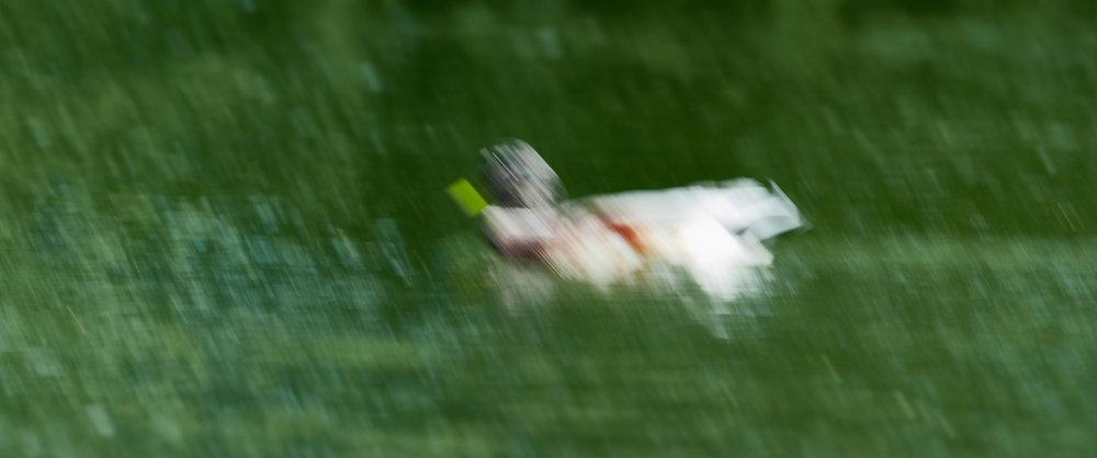 Duck focus1600x1200 sRGB 5.jpg
