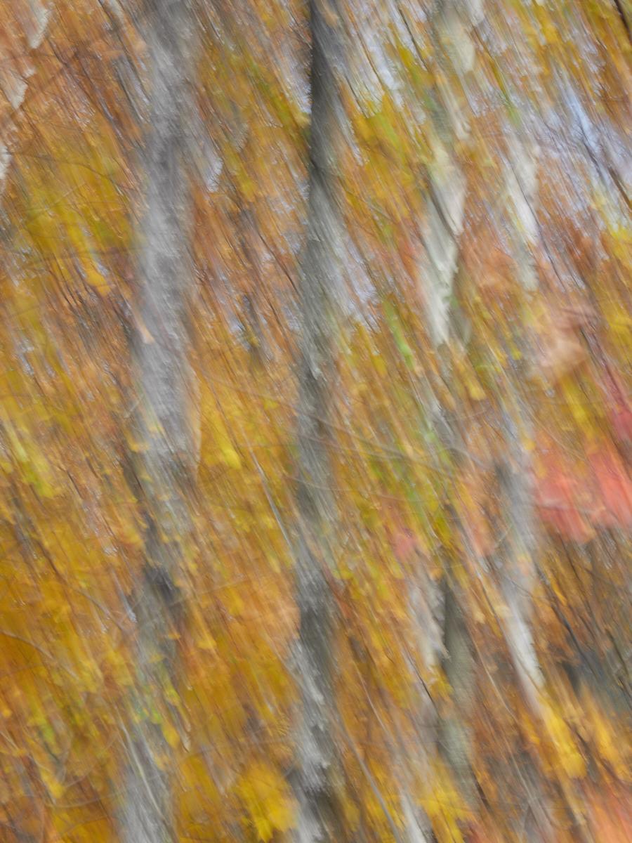 Canadian Fall ICM1600x1200 sRGB 10.jpg