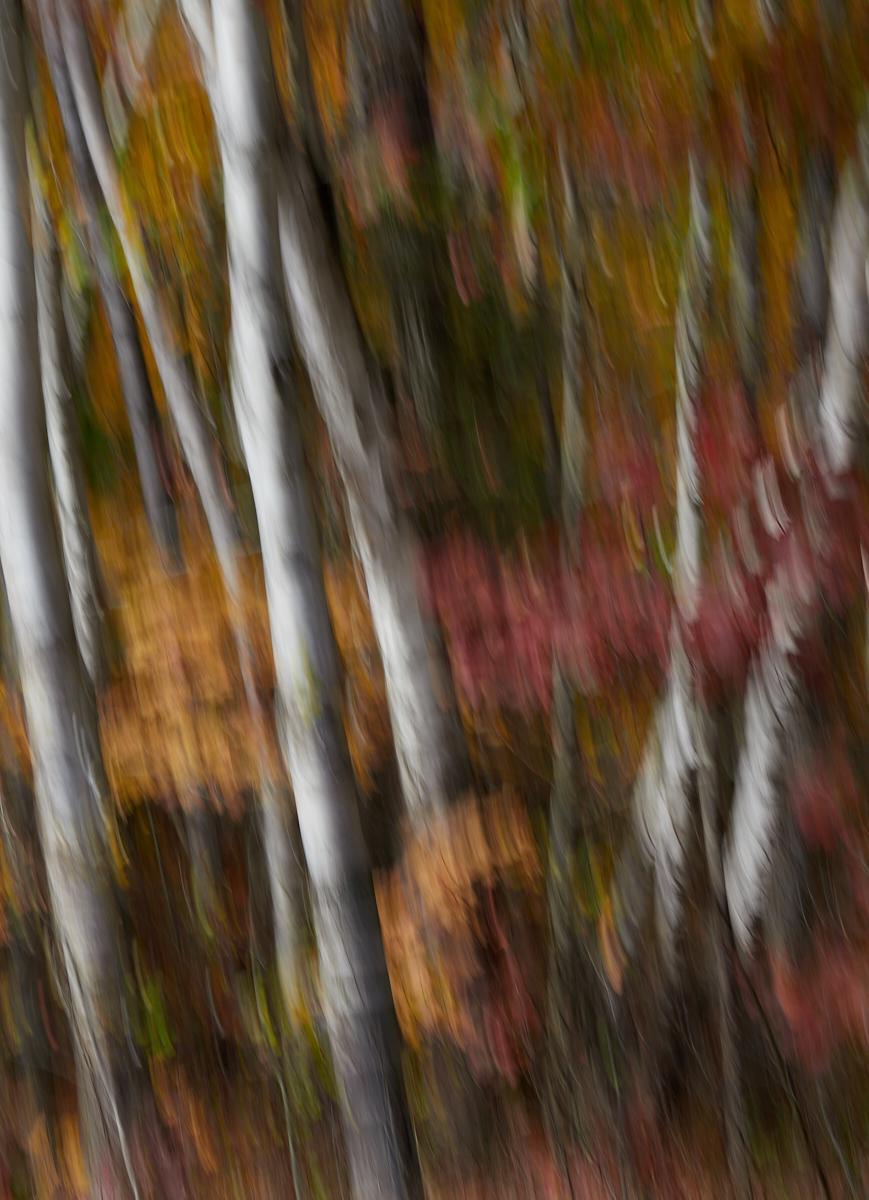 Canadian Fall ICM1600x1200 sRGB 11.jpg