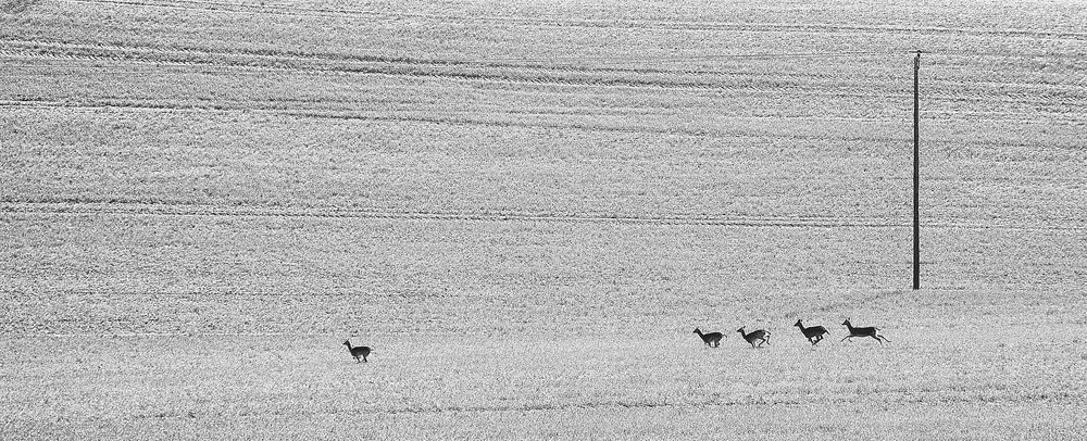 Running of the deer Hartland21600x1200 sRGB 1.jpg