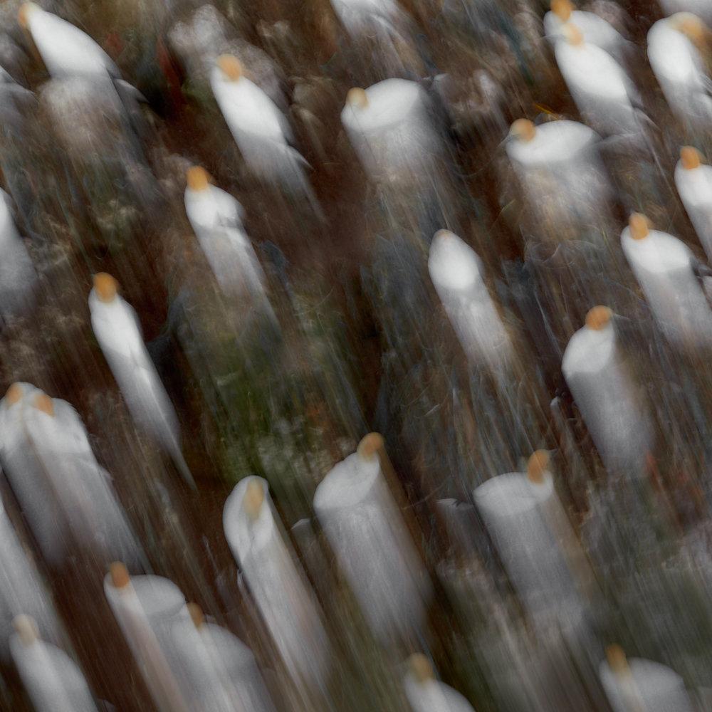 Gannet rock1600x1200 sRGB 2.jpg