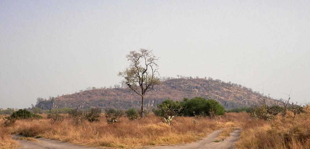 Leopard Hill, Savute