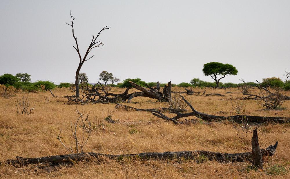 Savute landscape 1600x1200 sRGB.jpg