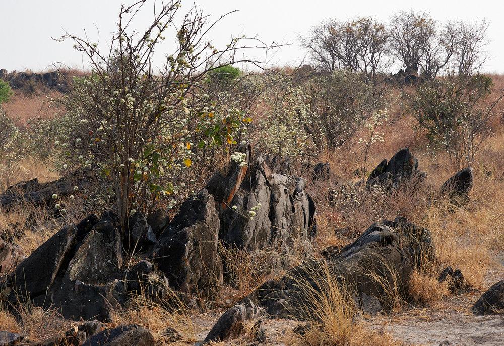 Savute landscape 1600x1200 sRGB 2.jpg