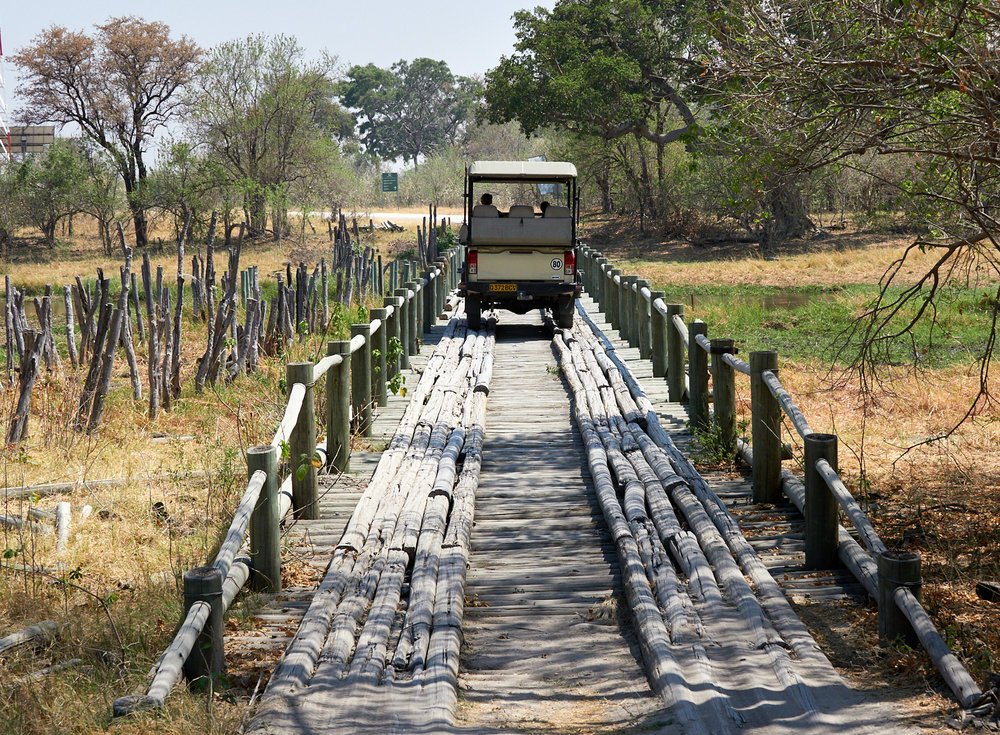 Crossing the rickety pole bridge across the largely-dry marsh in to the Moremi reserve