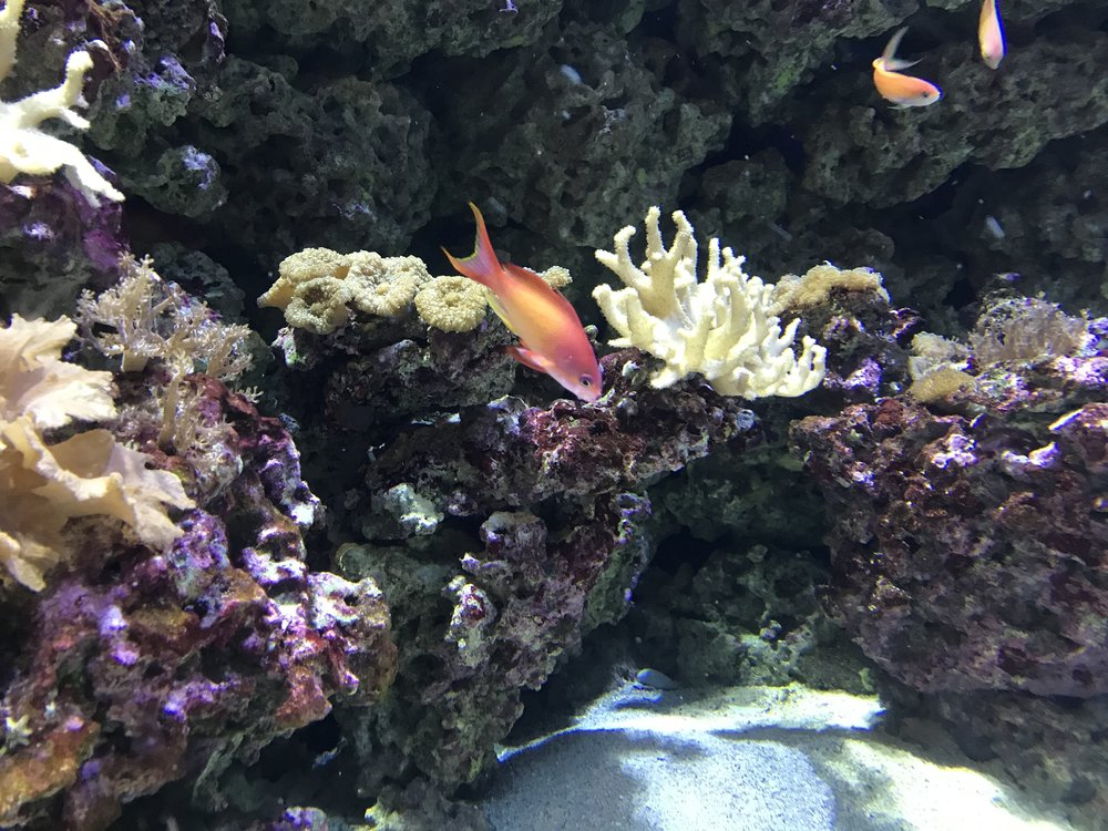 Aquarium - The aquarium was filled with interesting sea life