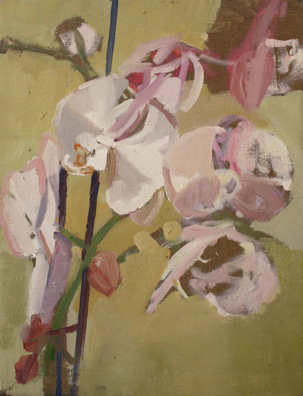 35 x 27 cm Pink Orchid III, Oil on Canvas