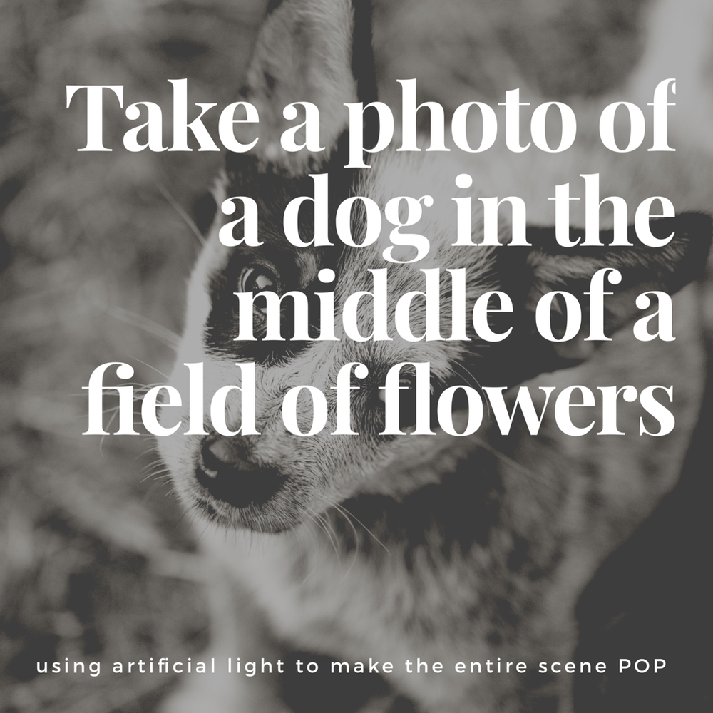Brooke Bryand Photography_Dog in Field_6561.PNG