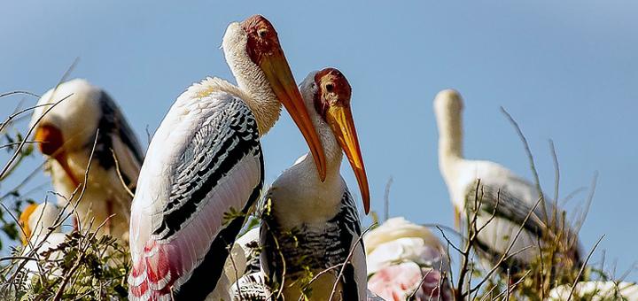 Image source:http://hibengaluru.com/kokkare-bellur-pelicanary/