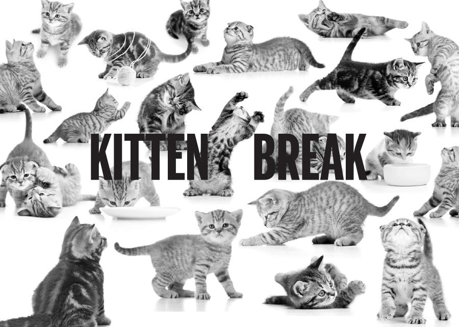 kittenbreak.jpg