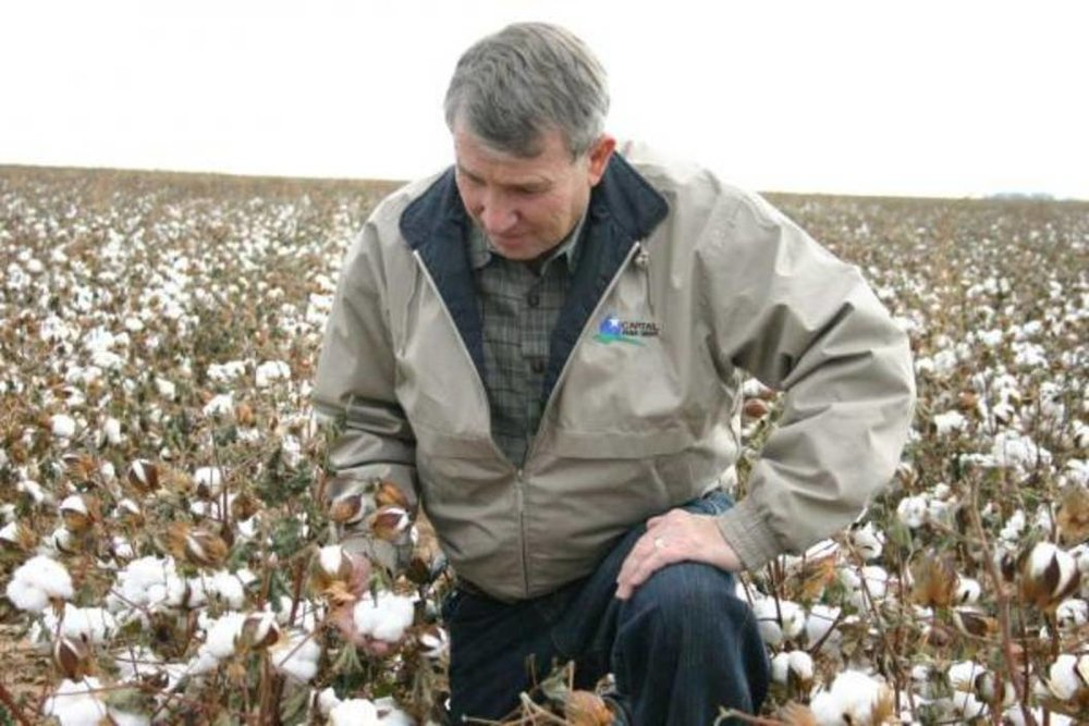 Jimmy Wedel in one of his Organic cotton fields. Photo: Josie Musico for Lubbock Online