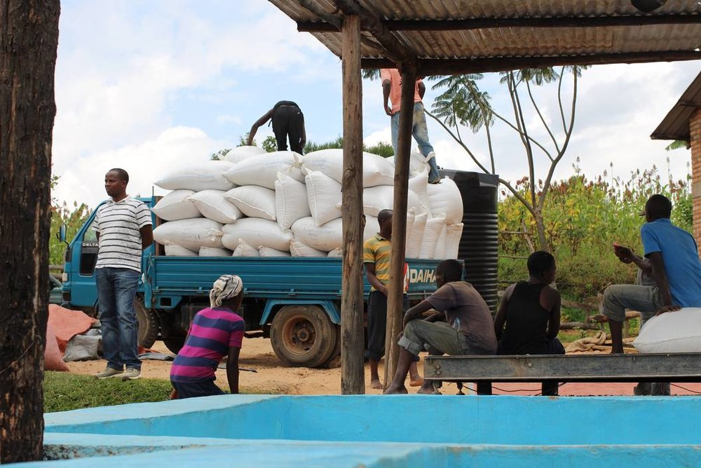 Coffee cherries arriving from a local collection point ready to be processed at Remera Mill in Rwanda