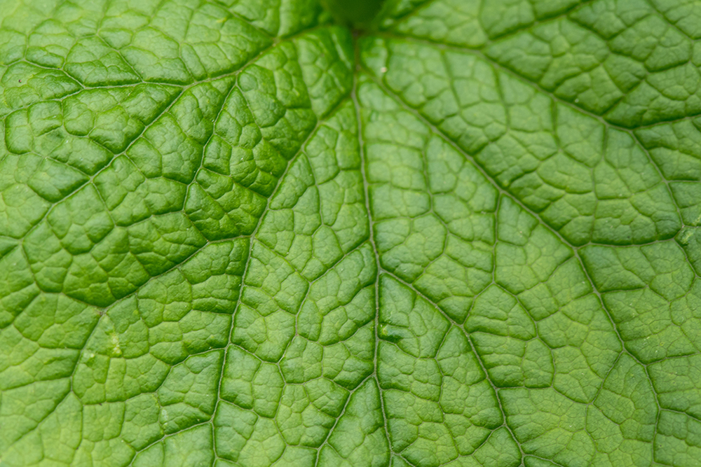Leaf Texture Macro, Great Smoky Mountains National Park