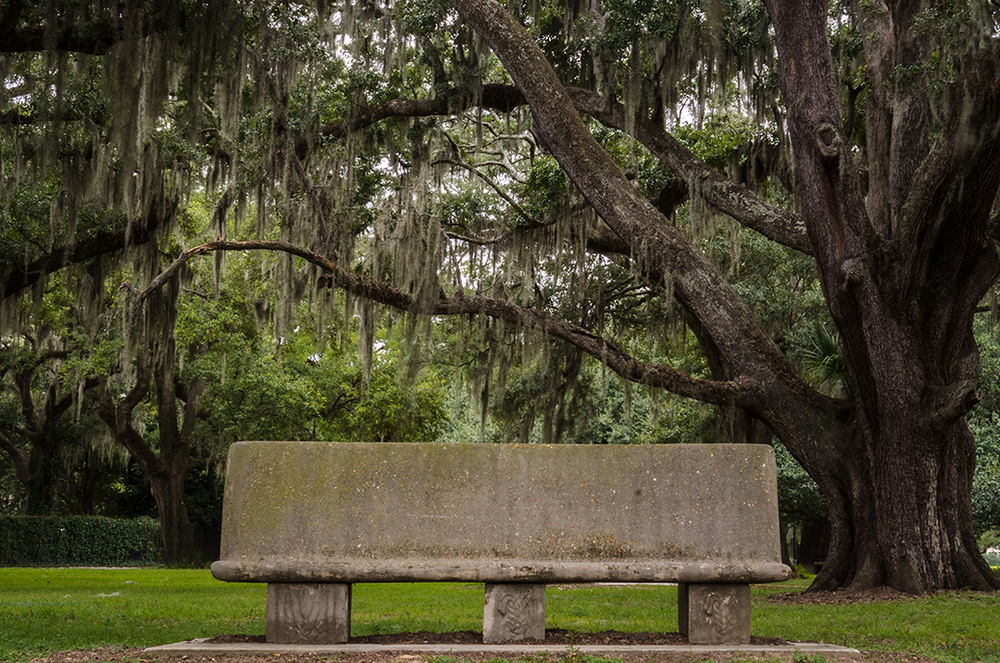 Bench in Live Oak Grove, New Orleans, Louisiana
